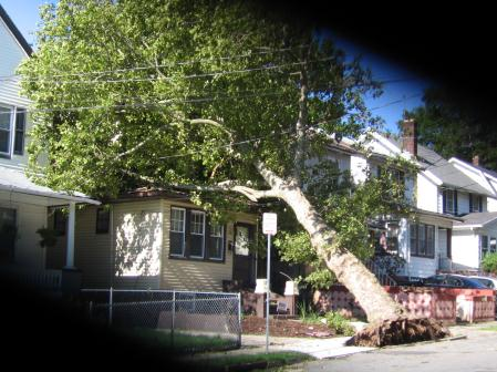 Aftermath of Irene, Tree falls on house